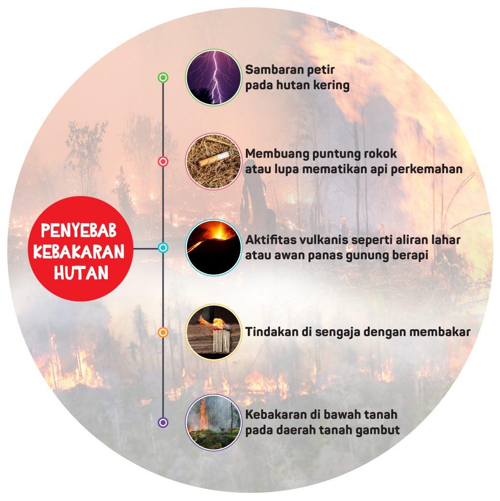 Apa aja yang menyebabkan terjadinya kebakaran hutan