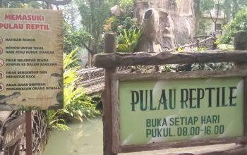 pulau reptil safari garden hotel
