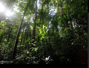 hutan Papua Barat