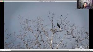 burung di Papua